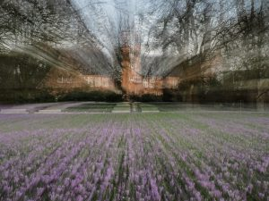 Krokusblüte-Zoom auf Baum